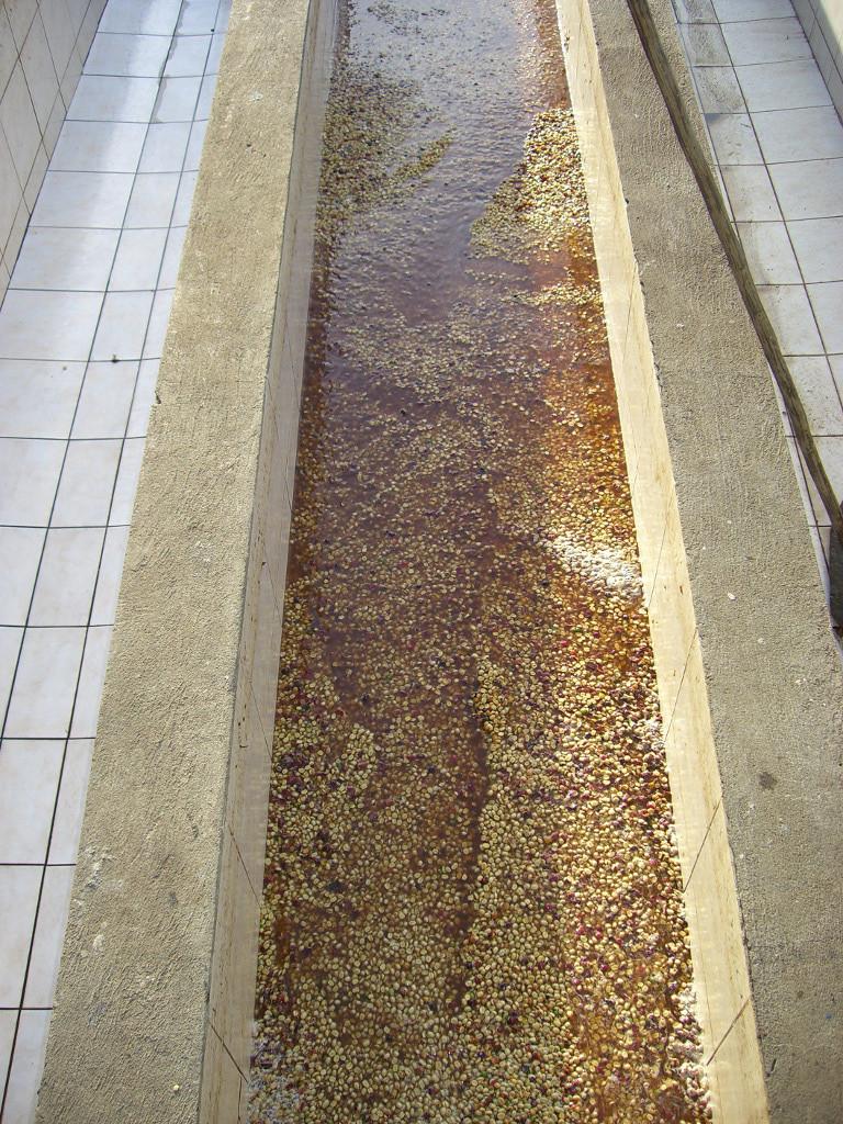 """Fermentierbecken für einen """"Fully Washed"""" Kaffee"""