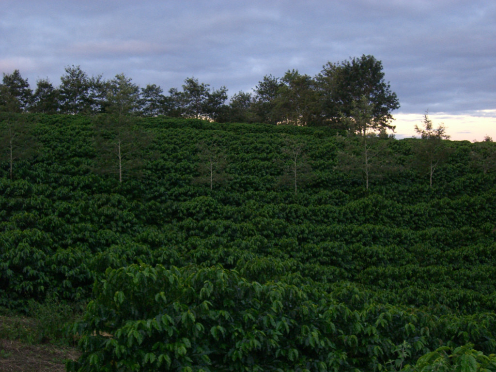 Kaffeefarm Primavera in Barra do Choca