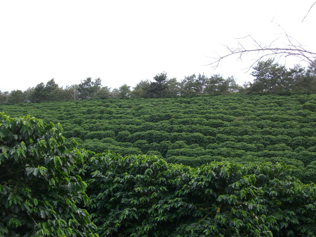 Kaffeefarm Primavera in Barra do Choca