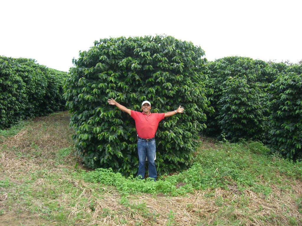 Stolz auf die prächtigen Kaffeepflanzen
