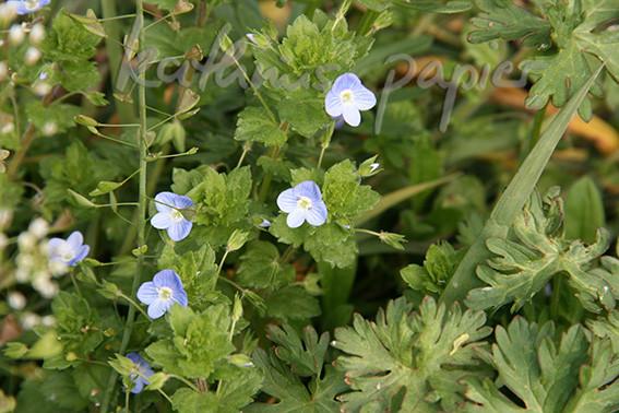 Kathrins Papier Blumen 6