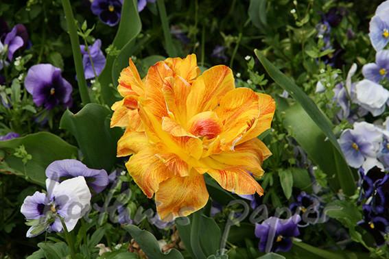 Kathrins Papier Blumen 1