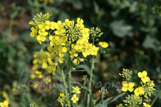 Kathrins Papier Blumen 5