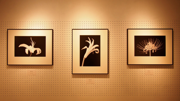 「花のヌード写真」ともいうべき白圡の作品「肢体」。出力に目を凝らして見てみて欲しい。