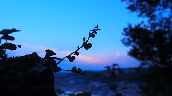何気ない葉も、夕暮れ時には美しく見える。日常の中に潜むかわいらしさを探すのも、ツアーの醍醐味。