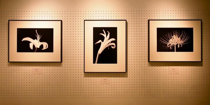 白圡の作品は「肢体」と名付けられた。選び抜かれた印刷用紙に印刷されており、深い黒が印象的だった。