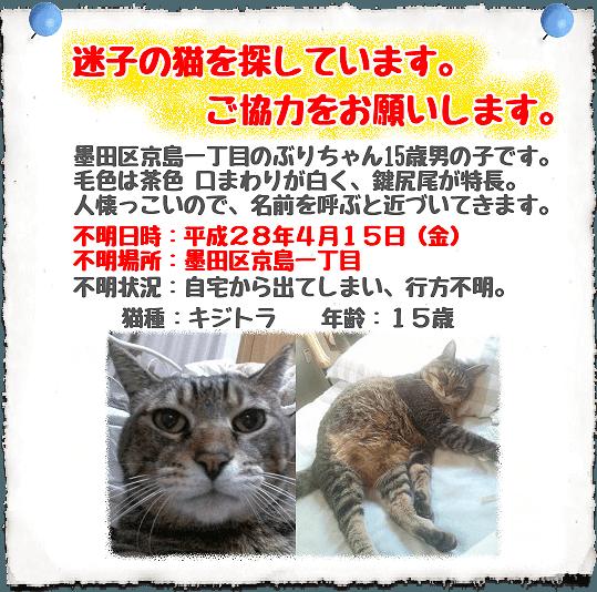 迷子猫情報
