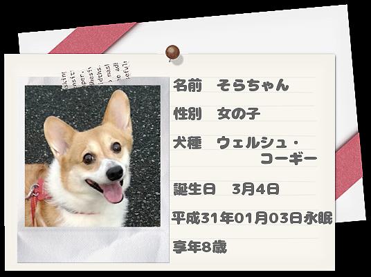 愛犬そらちゃん