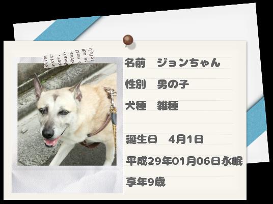 愛犬ジョンちゃん