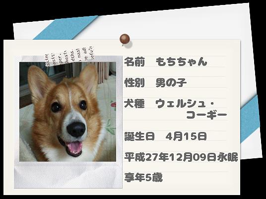 愛犬もちちゃん