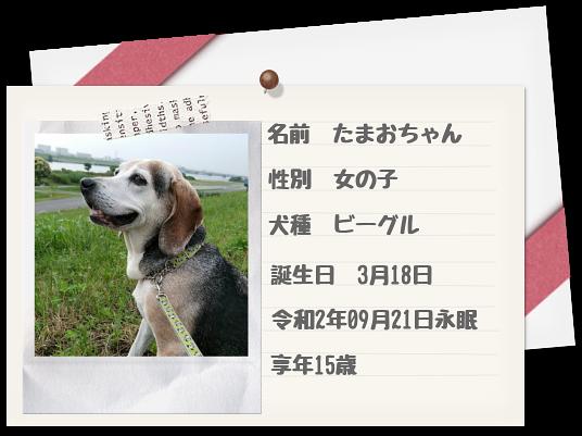 愛犬たまおちゃん
