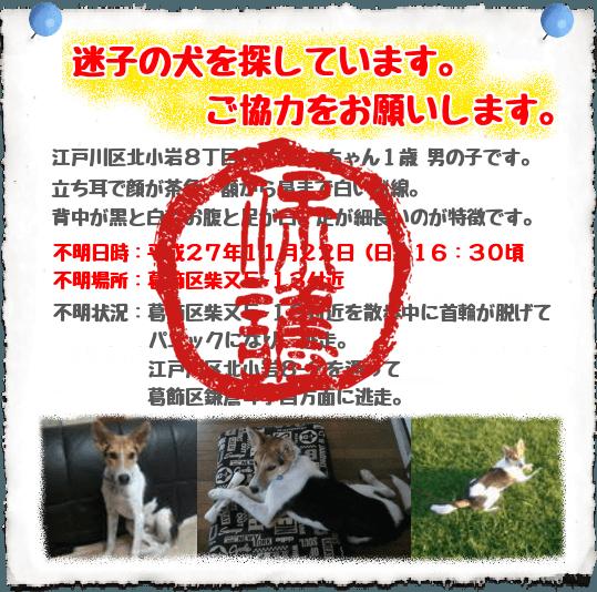 迷子犬保護