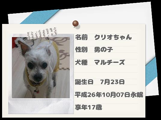 愛犬クリオちゃん