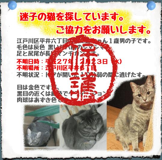 迷子猫保護