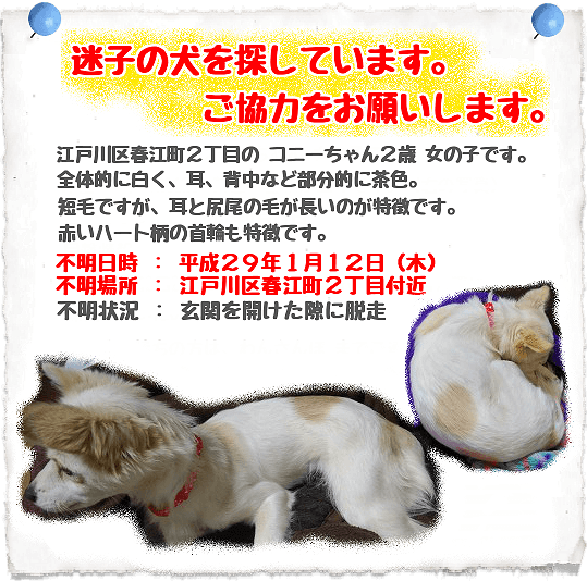 迷子犬猫情報