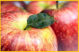 Mehr über die Bedeutung von alten Obst- und Gemüsesorten und wo man sie erhält, erfahren Sie beim Verein ARCHE NOAH.