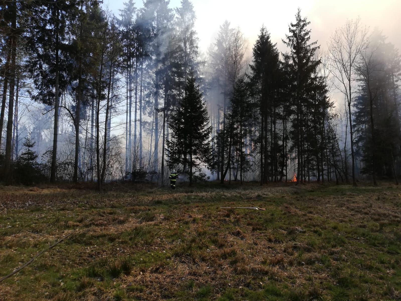 WaldbrandHalbenrain, Foto Patrick Drobetz, FFG_.jpeg