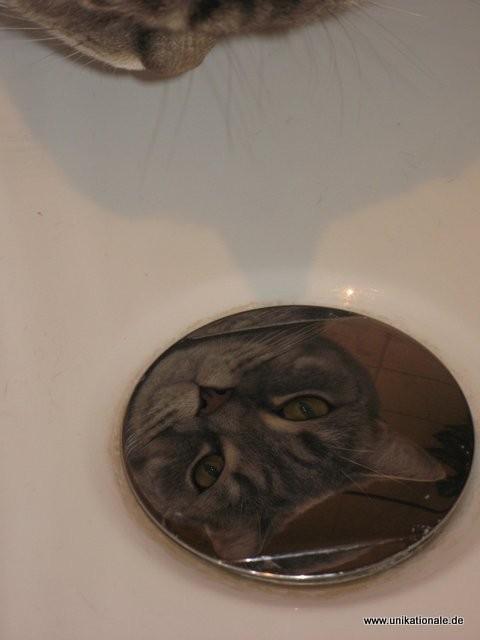 Balou - schaut in den Abflußstöpsel der Badewanne