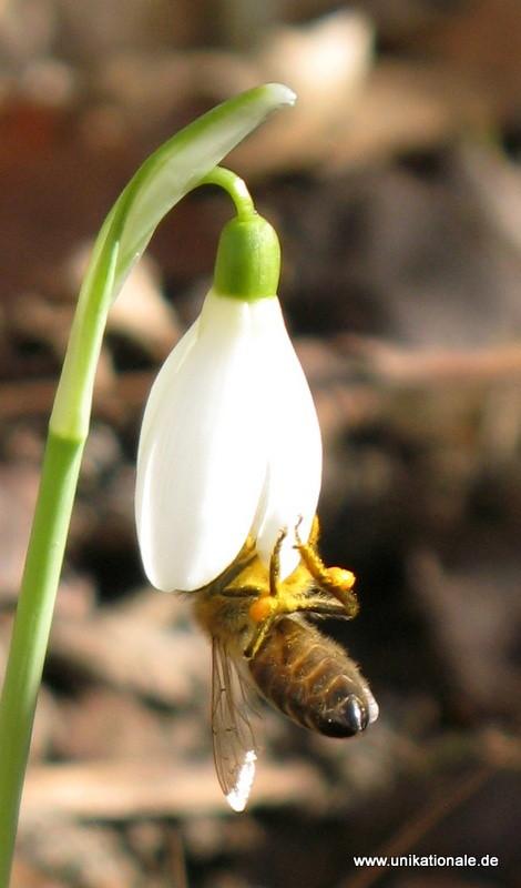Frühling wird's!
