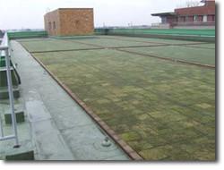 屋上緑化例