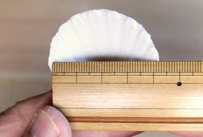 貝の幅を測る