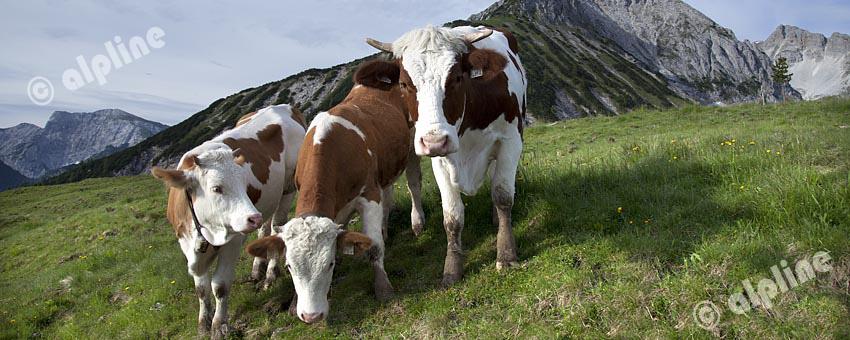 Begegnung im Karwendel Gebirge, Tirol