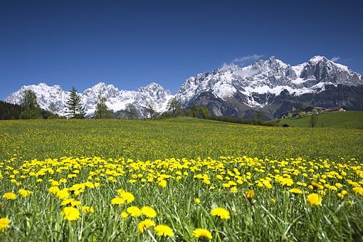 Frühling am Wilden Kaiser bei Going, Tirol