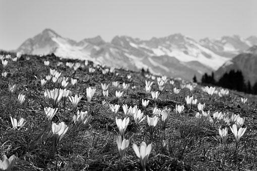 Tirol, Region Zillertal; Frühlingsstimmung im Tuxertal am Rastkogelsee gegen Wollbachspitze