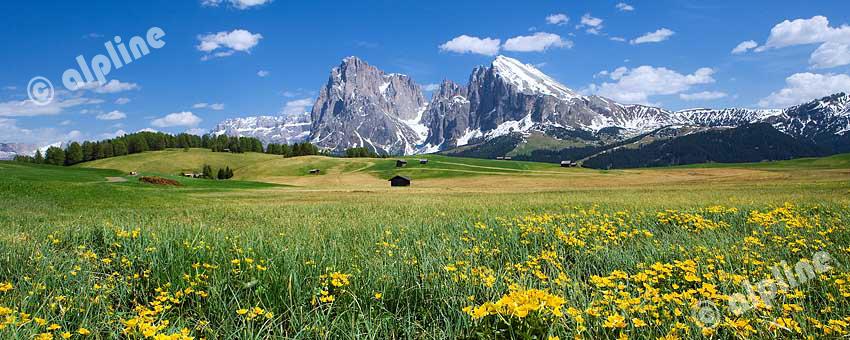 Das Langkofel-Massiv von der Seiser Alm am Schlern im Eisacktal, Dolomiten, Südtirol