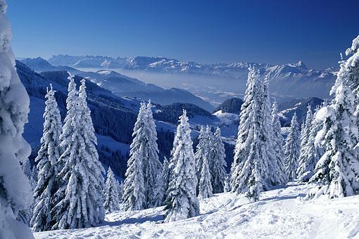 Winterlandschaft bei Kitzbühel in Tirol