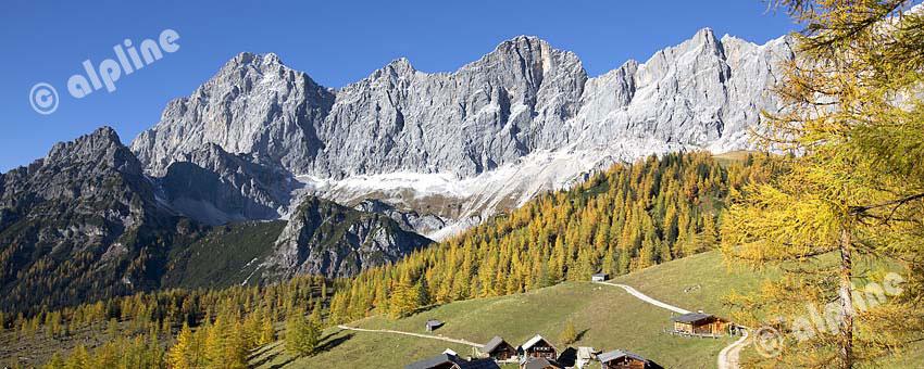 Steiermark: Dachsteinmassiv in der Obersteiermark, herbstliche Lärchen bei der Neustadtalm gegen Dachsteinmassiv
