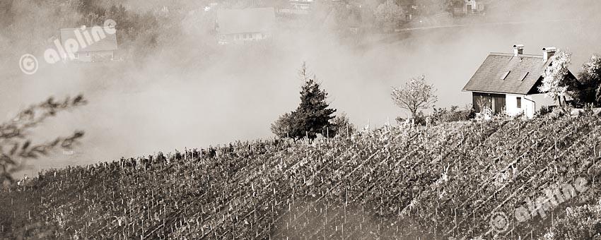 Herbstlicher Stimmung über den Weinbergen von Kitzeck in der Weststeiermark, Österreich. sepia