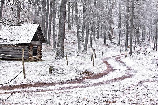 Winterliche Lärchenwiesen am Mieminger Plateau, Tirol