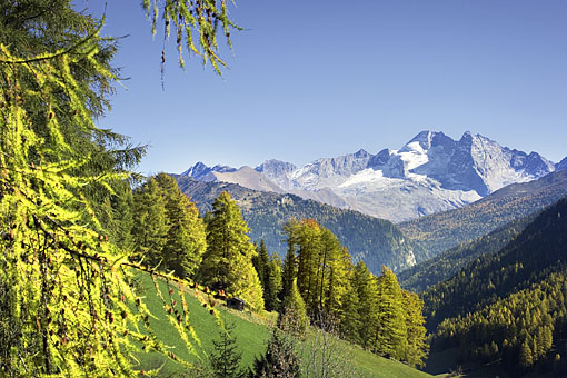 Blick aus dem Obernbergtal im Wipptal gegen Olperer (Tuxer Alpen - Zillertal), Tirol