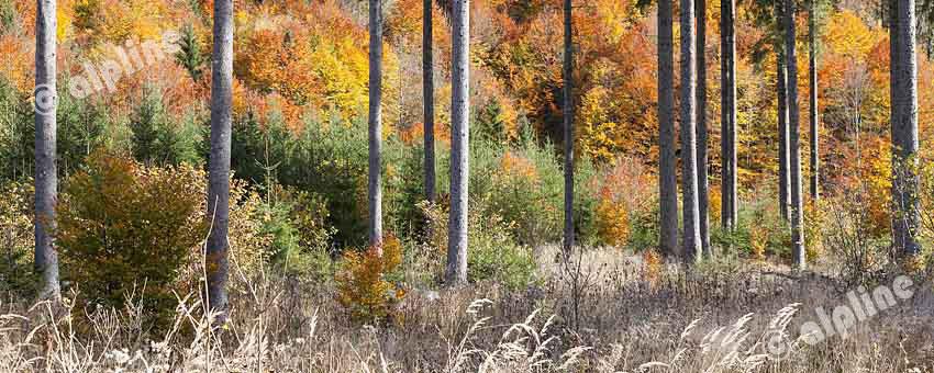 Herbstlicher Hochwald