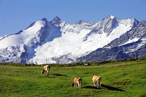 Tirol • Grenzbereich zu Salzburg, Gabler und Reichenspitze in den östlichsten Zillertaler Alpen