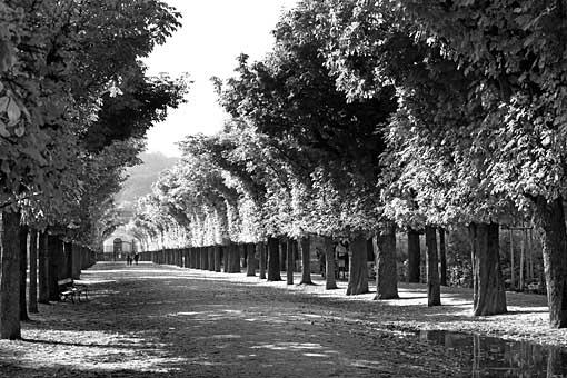 Allee in Schönbrunn, Wien