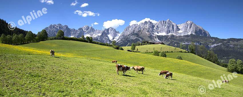 Region Kitzbühel: Going a.Wilden Kaiser, Das Kaisergebirge bei Going, Tirol