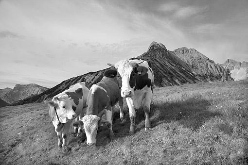 Begegnung im Karwendel bei Pertisau am Achensee, Tirol