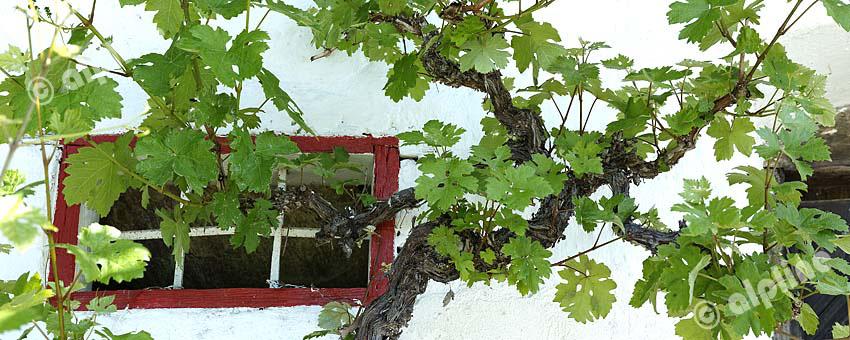 Stilleben in der Weinregion Sausal-Kitzeck in der Weststeiermark