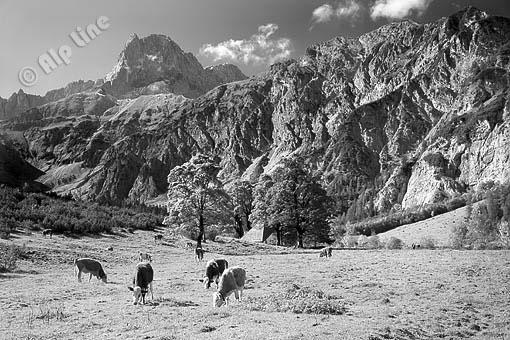 Achensee Region; im Falzthurntal, Blick gegen die Lamsenspitze, Karwendel, Tirol
