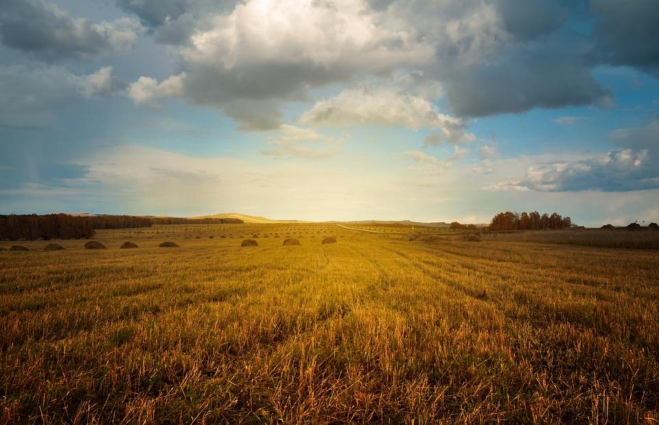 Landwirtschaft hat Zukunft: Kleinbauern unterstützen!