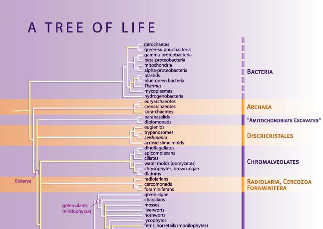 El árbol de la vida de Science