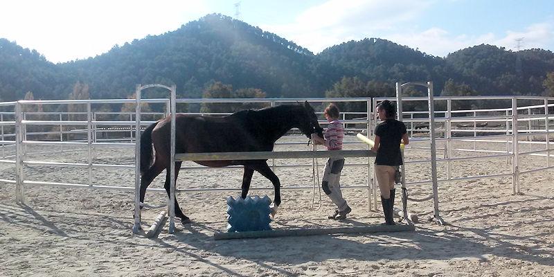 Como enseñar a tu caballo superar situaciones dificiles para él