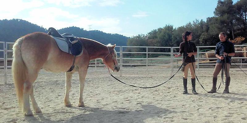 Técnicas de trabajar el caballo con la cuerda larga