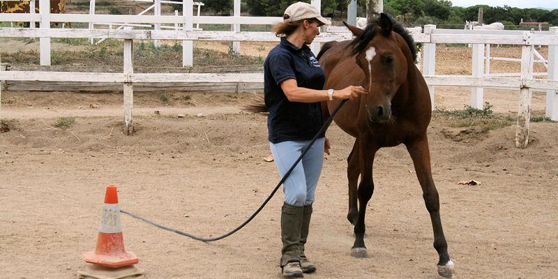 Método didáctico y sucesivo para educar el caballo