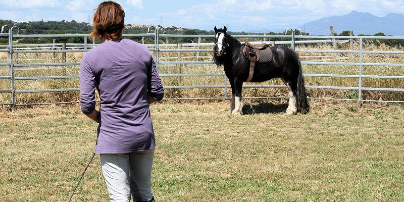 Ganar la atención, confianza y respeto del caballo