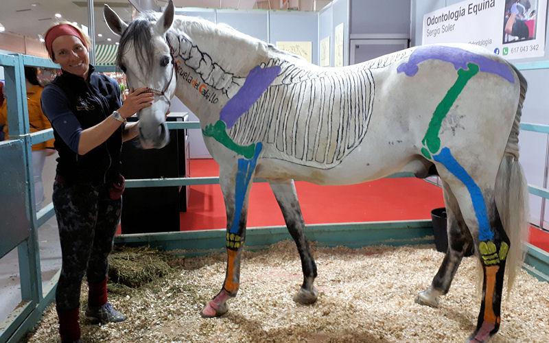 Anatomía en Movimiento, la biomecánica del caballo - Escuela del Caballo