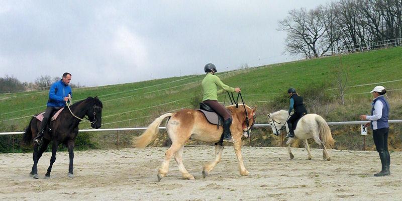 Preparar al caballo a su uso en la equitación