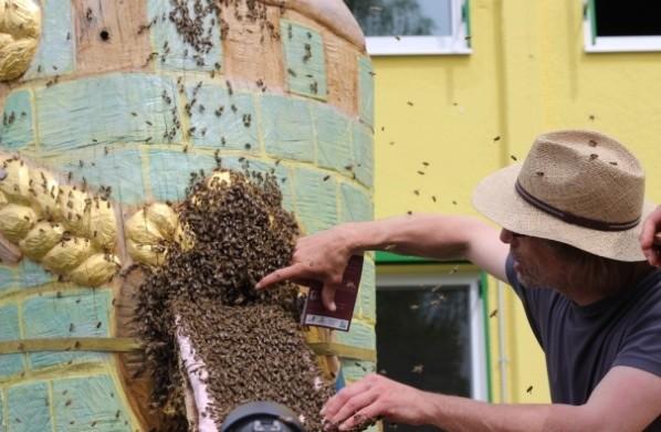 Markus Haseitel logiert die Bienen bei der Figurenbeute Rapunzel ein, Naturkost Rapunzel, Legau